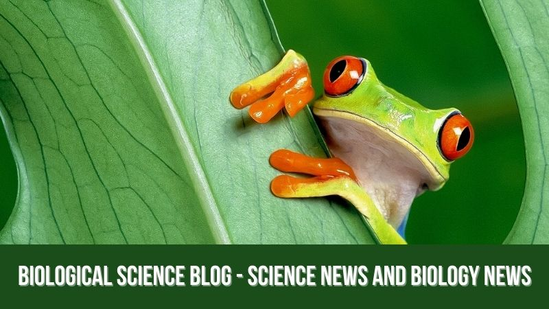 Biological Science Blog - Science News and Biology News